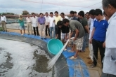 Ninh Thuan Industrial Shrimp no antibiotics and chemicals